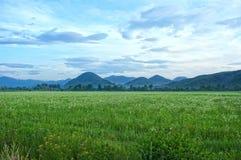 Prado verde na montanha Fotos de Stock Royalty Free