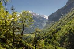 Prado verde no fundo coberto de neve das montanhas em cumes suíços fotografia de stock royalty free