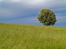 Prado y árbol de la ladera oscureciendo el cielo Imágenes de archivo libres de regalías