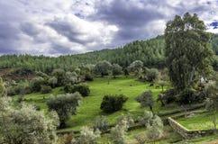 Prado y árboles de la hierba verde con el cielo azul Imagen de archivo