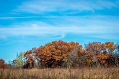 Prado y bosque el otoño foto de archivo libre de regalías
