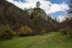 Prado y bosque en el parque nacional georgiano fotos de archivo libres de regalías