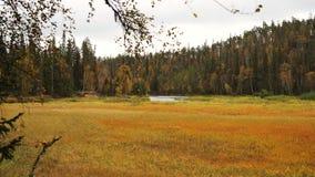 Prado y bosque otoñales Imagen de archivo libre de regalías