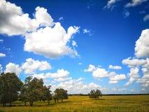 prado y cielo azul foto de archivo libre de regalías