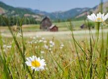 Prado y granja Imagen de archivo libre de regalías