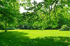 Prado y hojas verdes Foto de archivo libre de regalías