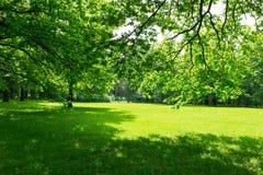 Prado y hojas verdes Fotos de archivo libres de regalías