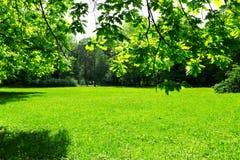 Prado y hojas verdes Imagen de archivo libre de regalías