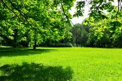 Prado y hojas verdes Imágenes de archivo libres de regalías