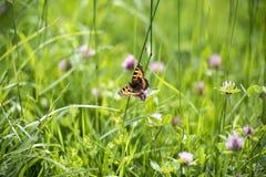 Prado y mariposa Foto de archivo libre de regalías