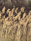 Prados Imagen de archivo libre de regalías