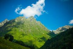 Prados alpinos Imagem de Stock Royalty Free