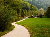 Prados alpinos de florescência fotografia de stock royalty free