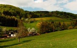 Prados alpinos de florescência imagem de stock