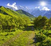 Prados alpinos en el pie del glaciar de Tetnuldi, paso de Chkhutnieri Imagen de archivo libre de regalías