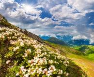 Prados alpinos nas montanhas de Cáucaso. Imagens de Stock Royalty Free