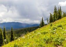 Prados alpinos que sirven el paisaje de Canadá del parque en verano Fotografía de archivo