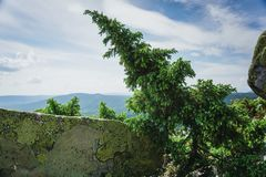 Prados alpinos Taganay Imagens de Stock