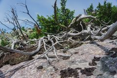 Prados alpinos Taganay Fotografía de archivo libre de regalías