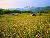 Prados das cabanas da montanha com as flores amarelas nas dolomites no por do sol Imagens de Stock Royalty Free