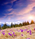 Prados de florescência Imagens de Stock