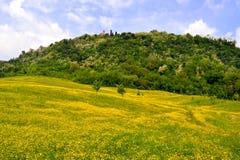 Prados de la flor de las colinas Fotografía de archivo libre de regalías