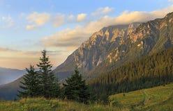 Prados de la montaña del verano con el bosque del pino-árbol imagen de archivo