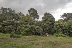 Prados de Tanzania Foto de archivo