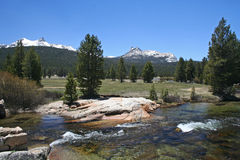 Prados de Tuolumne, passagem de Tioga, Yosemite Imagem de Stock