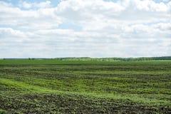 Prados del paisaje Fotografía de archivo