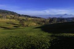 Prados do campo com árvores Fotografia de Stock