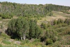 Prados e bosques imagem de stock royalty free