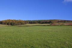 Prados e madeiras do Upland Fotos de Stock Royalty Free