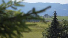 Prados e madeiras no meio das montanhas filme