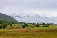 Prados en el amarrar, montaña de Bondone, Trento del Wildflower Fotos de archivo libres de regalías