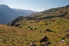 Prados en el barranco de Colca, Perú imagen de archivo