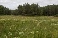 Prados llamativos de hierbas, de la fuente abundante y de los pájaros que cantan y todo alrededor del perímetro del bosque imagen de archivo libre de regalías