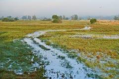 Prados pantanosos en la primavera foto de archivo libre de regalías