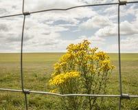 Prados - planície de Salisbúria/estrada e uma planta amarela imagens de stock royalty free