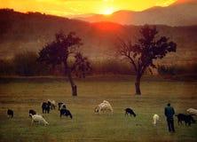 Prados rojos de las tierras de labrantío Foto de archivo libre de regalías