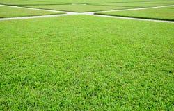 Prados verdes Fotografía de archivo