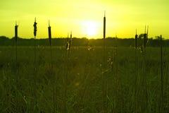 Prados verdes Fotos de archivo