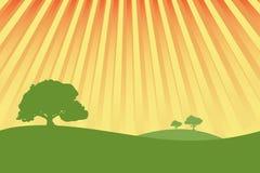 Prados verdes com ra da luz do sol Imagens de Stock Royalty Free