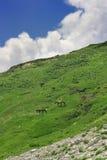 Prados verdes de la montaña Foto de archivo libre de regalías