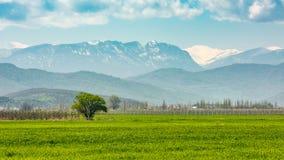Prados verdes de la primavera Fotos de archivo