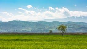 Prados verdes de la primavera Fotografía de archivo libre de regalías