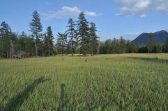 Prados verdes en el valle de la montaña del río Suntar. Foto de archivo libre de regalías
