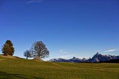 Prados verdes en fondo alpino del paisaje Imagenes de archivo