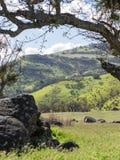 Prados verdes en las montañas con los robles Imagenes de archivo