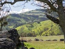 Prados verdes en las montañas con los robles Imágenes de archivo libres de regalías